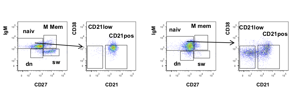 B cell subpopulations of a healthy donor (left) and a CVID patient showing CD21low B cells (right)